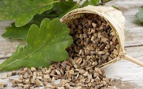 Кора дуба - лечебные свойства и применение