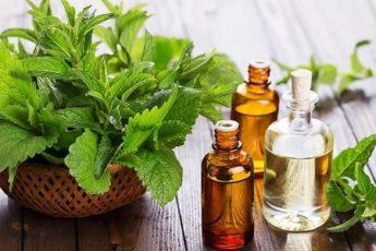 Лечебные свойства масла мяты перечной