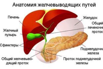 Растительные желчегонные средства