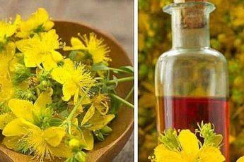 Полезные свойства зверобойного масла