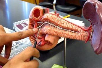 Симптомы и лечение панкреатита у взрослых