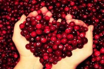 Полезные свойства ягод клюквы
