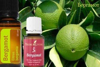 Свойства и применение масла бергамота