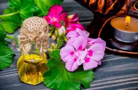 Свойства эфирного масла герани